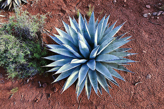 James Steele - Cactus
