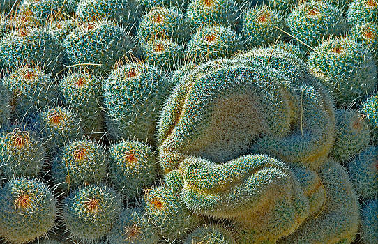 Mae Wertz - Cactus Jaw