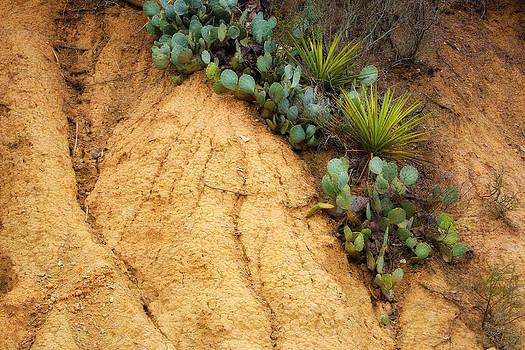 Cactus by Joan Bertucci