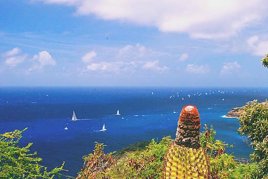 Gary Wonning - Cactus overlooking ocean
