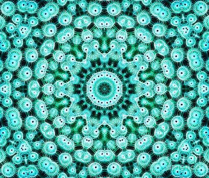 Cactus Star by Bel Menpes