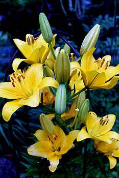 Hanne Lore Koehler - Caged Lilies