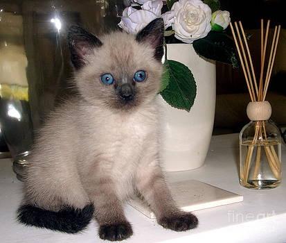 Calendar Kitten Rescue #11 by Nancy Belle