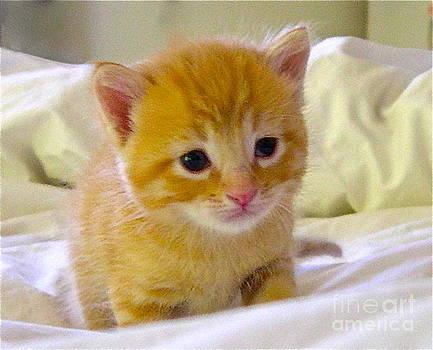 Calendar Kitten Rescue #6 by Nancy Belle
