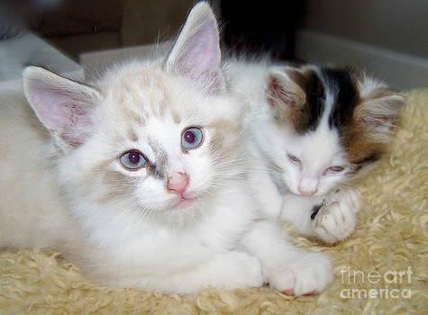 Calendar Kitten Rescue #8 by Nancy Belle