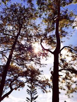 Caleruega Fine Trees by Jim Carl Mangaoil