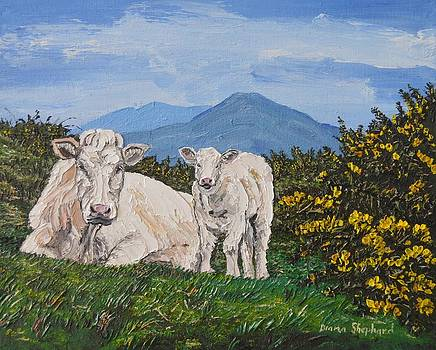 Calf and Mother Connemara Ireland by Diana Shephard