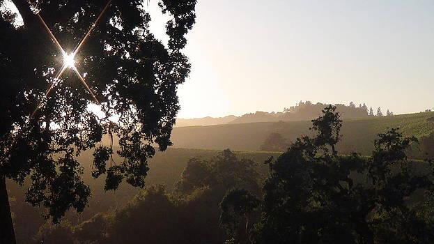 Cali Sun Set by Shawn Marlow