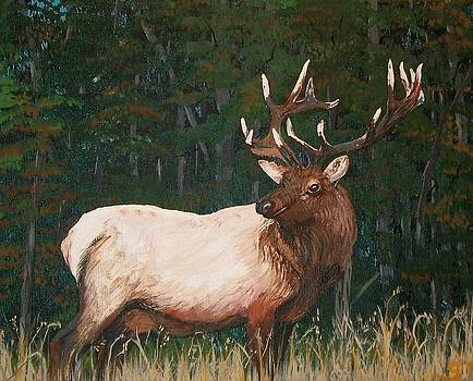 Sharon Duguay - California Bull Elk