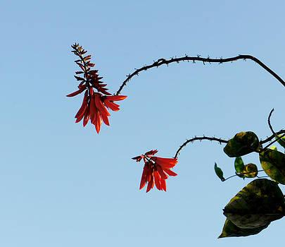 California Coast Flower by Nadra Raquel