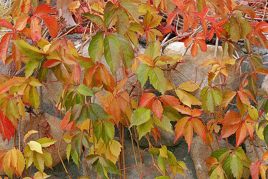 Wes and Dotty Weber - California Fall Colors