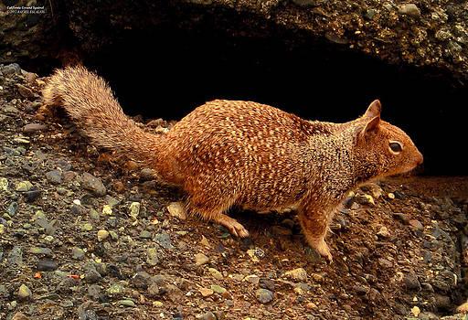 California Ground Squirrel by Rafael Escalios
