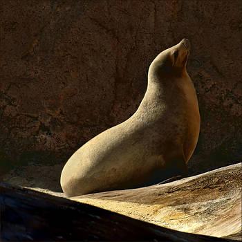 Nikolyn McDonald - California Sea Lion -Basking