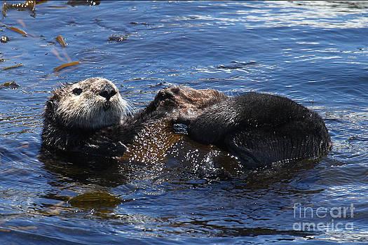 California Views Mr Pat Hathaway Archives - California Sea Otter in Monterey Bay Pat Hathaway Photo