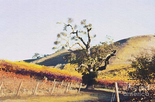 Artist and Photographer Laura Wrede - California Vineyard Series Oaks in the Vineyard