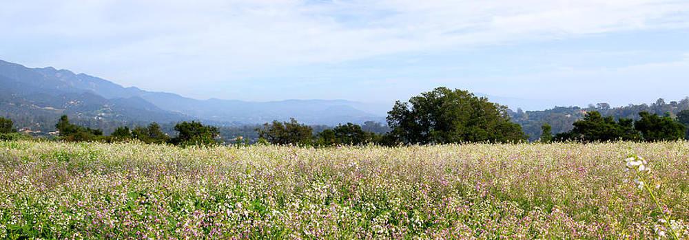 California Wildflowers by Jan Cipolla