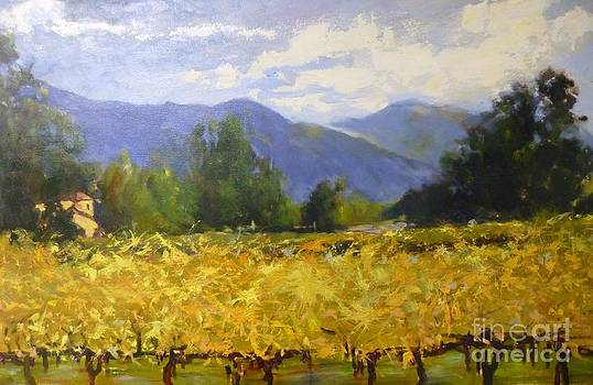 Calistoga Vineyard by Thomas Phinnessee