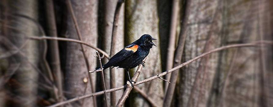 Call of the Red Winged Blackbird by Henry Kowalski