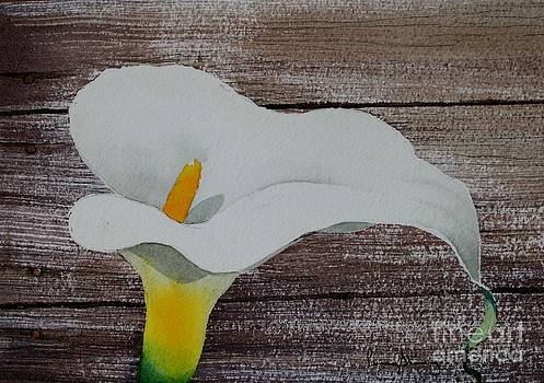 Calla in the Delta by Penny Stroening