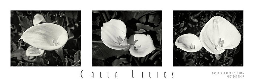 Calla Lilies Horizontal with Title and Nameplate by David Doucot
