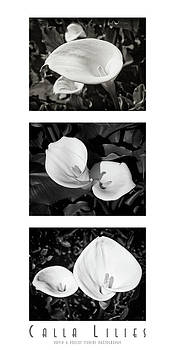 Calla Lilies Vertical with Title and Nameplate by David Doucot