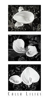 Calla Lilies Vertical with Title by David Doucot