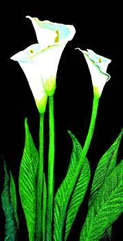 Calla Lilies by Victoria Rhodehouse