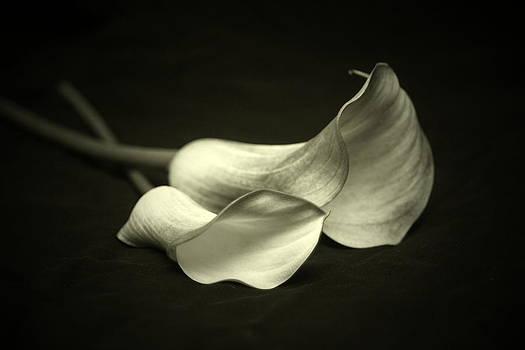 Calla Lillies by Linda Fowler