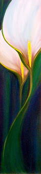 Calla Lily by Dina Holland