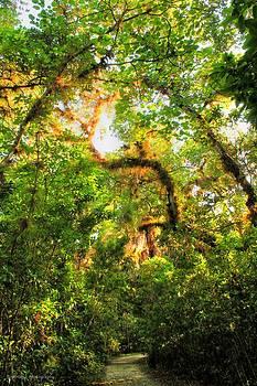 Caloosahatchee Trail by Vanessa Parent