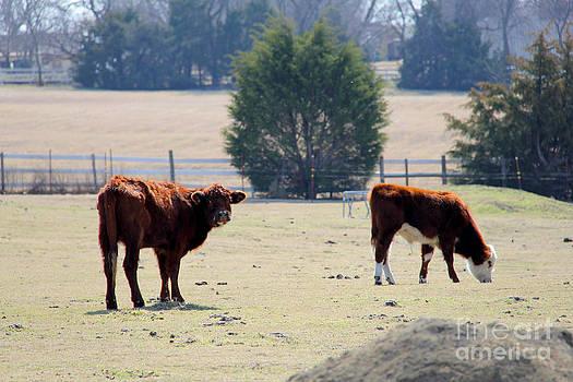 Calves 1 by Elizabeth Matlock
