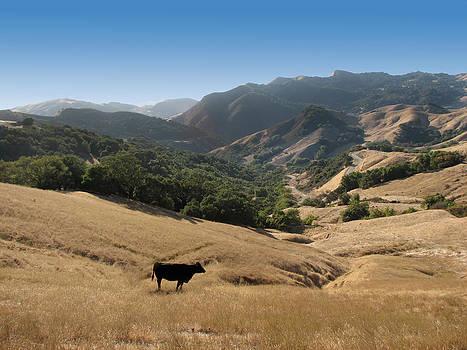 Cambria California Country Road by Jan Cipolla