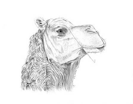Camel by Lloyd  Gardner