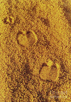 Elizabeth Hoskinson - Camel Prints in the Sand