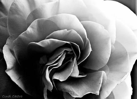 Cindi Castro - Camellia 4