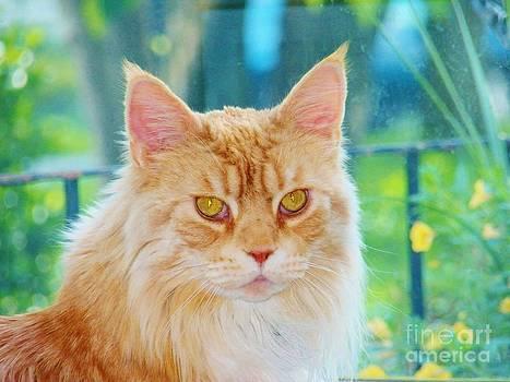 Judy Via-Wolff - Cameo Golden Eyes