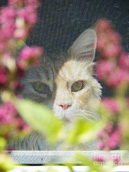 Judy Via-Wolff - Cameo peeking through the Screen