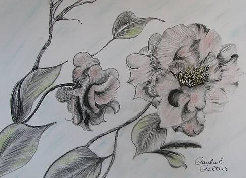 Camillias II by Paula Peltier