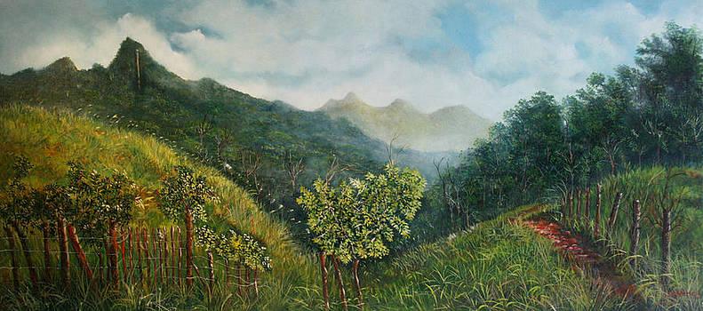 Camino hacia el cerro Trinidad by Ricardo Sanchez Beitia