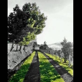 Camino by Katalina Fuentes