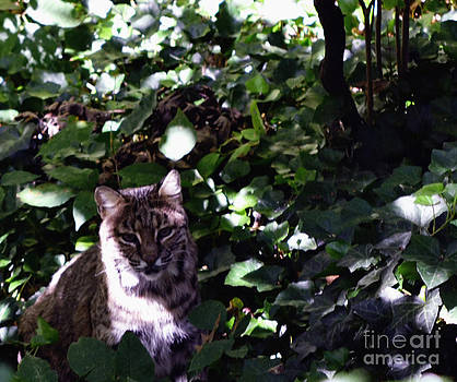 Camouflage Bobcat by Eva Thomas