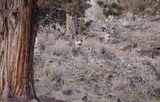 Camouflaged Deer  by Linda Larson