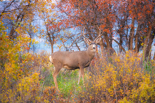 Camouflaged by Randy Giesbrecht