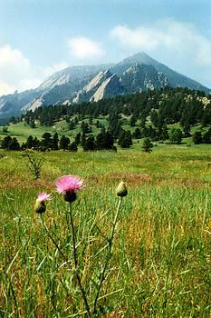 Marilyn Hunt - Chautauqua Wildflowers Boulder