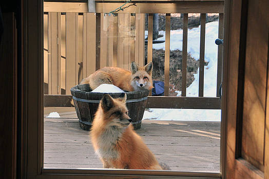 Matt Swinden - Can we come in please 1