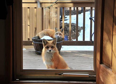 Matt Swinden - Can we come in please 2