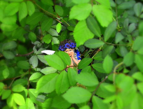 Can You See Me Woodland Fairies by Linda Rae Cuthbertson