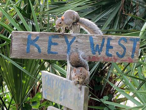 Can you tell us how to get to Key West by Brandi Jones