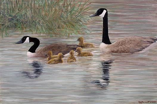 Canada Goose Family by Kathleen McDermott