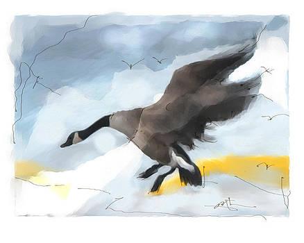 Canada Goose Landing by Bob Salo